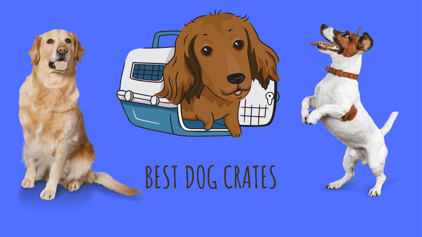 Top 3 Best Dog Crates